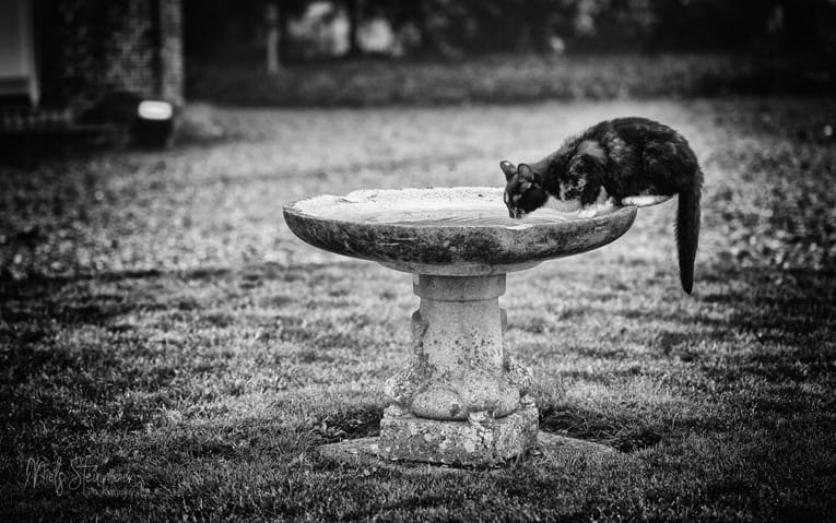 36/1 – Drinking Fountain